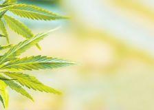 Les Cannabis Social Clubs : un dispositif de Promotion de la Santé ?